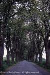 Country road, Jutland